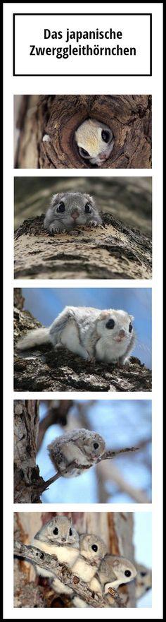 Das süßeste Tier der Welt - Win Bild | Webfail - Fail Bilder und Fail Videos