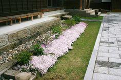 2011 June 本堂前の芝桜。白にピンクの縞が入っています。