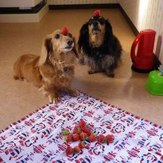Dogs and strawberry