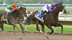 Handsome Mike(2009)Scat Daddy- Classic Strike By Smart Strike. 3x3x5 To Mr. Prospector, 5x5 To Northern Dancer And Damascus. $1,005,413. Won 2012 Penns. Derby(G2), 2013 Commonwealth S(G3).