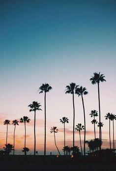 Beach Palms at Sunset
