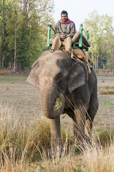 Jehangir Irani, Finalist, FJP Photo Contest.  A park ranger at Kanha National Park, Madhya Pradesh, India, commutes to work atop his trusty pachyderm.  While on the job, they patrol large swathes of the protected reserve, monitoring the health and welfare of all creatures, from big cats to pocket-sized birds.  Vote for Winner: http://a.pgtb.me/cbhVZ