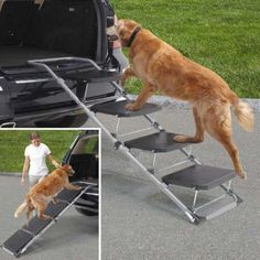 Pet ramp for car, truck, and SUV. Ideal for aging dogs or those with hip problems or arthritis. Each step has anti-skid surface to prevent slipping. The frame is adjustable. Folds for storage and transport. For pets upto 150lbs.
