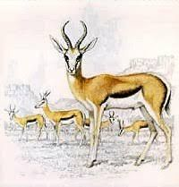 Image result for springbok sketch Moose Art, Sketch, Animals, Image, Sketch Drawing, Animales, Animaux, Sketches, Animal