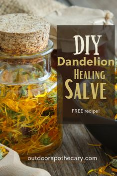 Amazing DIY Dandelion Salve - Your Cure for Aching Muscles - The Outdoor Apothecary