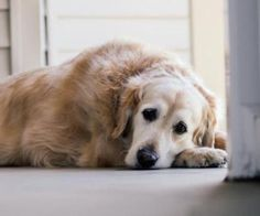 How to Prevent and Treat a Urinary Tract Infection in Dogs and Cats