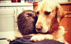 RESEARCHERS CONFIRM: YOUR DOG REALLY HEARS YOUR CRIES FOR HELP PACK BUDDY REHABILITATES RESCUE/SHELTER DOGS TO SERVE AS SERVICE DOGS FOR CIVILIANS AND, FREE, FOR U.S. VETERANS. SAVE A DOG, SAVE A VETERAN. David Utter, Dog Trainer: Service & Therapy Dogs, PTSD, Depression, Panic Attacks, Behavior Modification, Obedience. Train and Board. (http://dogtrainingorangecountyca.com/) www.DavidUtter.com (www.Pack-buddy.com) 1-888-959-7463