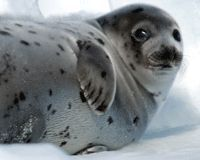 Care2 petition to put an end to the battering of seals.  Thank you to the organisers of the petition and those who take action to protect animals