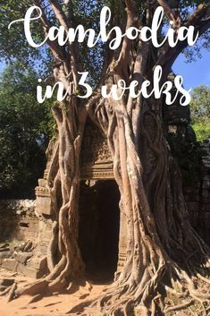 The only Cambodia itinerary you will ever need! Explore more than just Angkor Wat and Siem Reap with this comprehensive 3-week guide to a diverse and memorable experience.