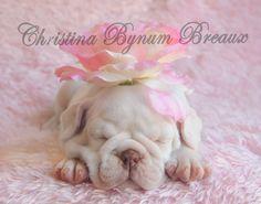 white bulldog sleeping