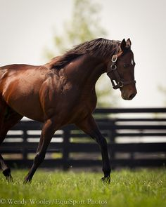 Ghostzapper at Adena Springs on 5.9.2011    Ghostzapper was put on the ballot for entry into the Racing Hall of Fame