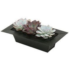 10.5 in. W x 5 in. D x 4 in. H Altman Plants Urban Long Echeveria Garden Plant-0881012 at The Home Depot