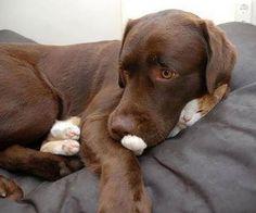 dog smooshing kitten.