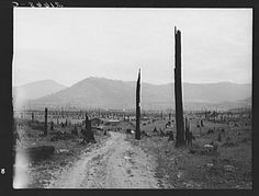 Landscape: stumps, sags, and stump farm in Priest River Valley. Bonner County, Idaho. General caption 49