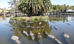 Gatorland -Orlando.  We had a fab time when we visited in Oct 2008 and the boys loved it!