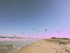 Birds.Beach.Lookslikefilm #summer