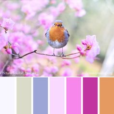Colors of Spring: 20 Spring Color Palettes for Inspiration — Mill Creek Creative Spring Color Palette, Colour Pallette, Spring Colors, Colour Schemes, Color Combos, Colours That Go Together, Beautiful Color Combinations, World Of Color, Mill Creek