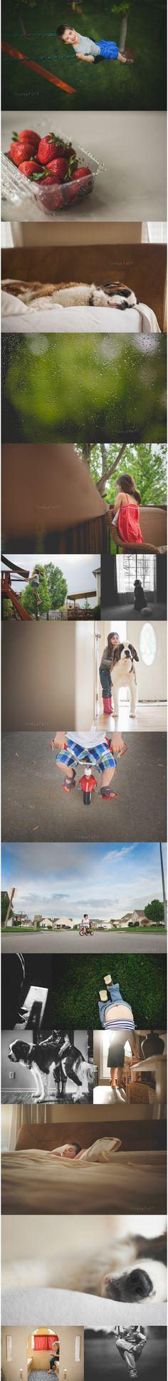 children, photography, lindy, pfaff, lifestyle, blog, inspiration, light, kids, daily, image, compare, animals, dog, saint bernard, st. bernard