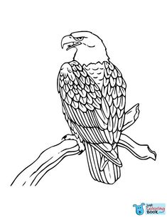 Bald Eagle Coloring Pages For Kids from Bald Eagle Coloring Pages category. Find out more nice pics to color for your children Bird Coloring Pages, Christmas Coloring Pages, Free Printable Coloring Pages, Adult Coloring Pages, Coloring Pages For Kids, Coloring Sheets, Coloring Books, Eagle Drawing, Eagle Vector