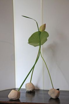 Ohara School of ikebana La Rochelle / Southwest - HANAMAÏ expresses the beauty of plants through their meeting at a single point. Three-dimensional arrangement.