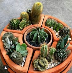 We all love succulents and cactus but do you know the difference between them? Click the post to learn on our website! Succulent Arrangements, Cacti And Succulents, Planting Succulents, Cactus Plants, Cactus Terrarium, Mini Cactus Garden, Cactus Flower, House Plants Decor, Cactus Decor