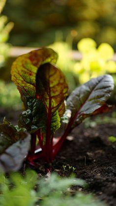 Leiden deine Pflanzen in der prallen Mittagssonne und an Trockenheit? Dann hast du vielleicht die falschen Pflanzen gepflanzt. Wähle Pflanzen, die mit großer Trockenheit zurechtkommen. Hier findest du viele Vorschläge.
