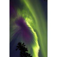 Aurora borealis Whitehorse Yukon Canada Canvas Art - Joseph BradleyStocktrek Images (12 x 18)