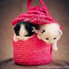 Image Result For Cute Dp For Whatsapp Kittens Cutest Cute Cats