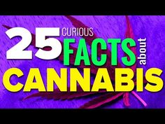 25 Curious Facts About Cannabis Most People Don't Realize