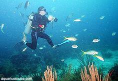 Diving in Honduras, Roatan Honduras Roatan, Scuba Diving, Fish, Pets, Animals, Diving, Animales, Animaux, Pisces