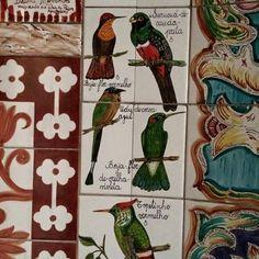 Pássaros da Igreja Nossa Senhora do Brasil - São Paulo