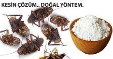 İstenmeyen Haşere ve Hamam Böceklerine Doğal Böcek İlacı – Bitkilog