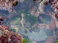 Stayed Home Today - News - Bubblews