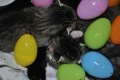 ~Tails from the Foster Kittens~: Easter Eggs and Jelly Beans