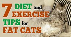 cats diet exercise tips http://healthypets.mercola.com/sites/healthypets/archive/2014/08/02/cats-diet-exercise-tips.aspx