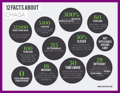 This is an image of a poster about the top 12 facts on Chaga mushroom