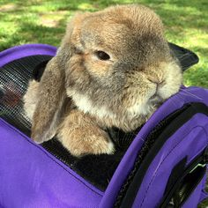 STURDIBAG™ SMALL CUBE PET CARRIER is paw-fect for rabbits too! #SturdiProducts