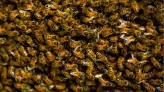 More than 30000 bees attack unsuspecting customers at Walmart Image: tim graham/getty images  By Heather Dockray2016-08-09 00:03:41 0300  Three people had to be transported to the hospital in a southeastern Oklahoma City Saturday morning after a swarm of bees broke loose at a Walmart and attacked unsuspecting shoppers. The bees came from the parking lot where a man was selling hives according to a local report.  An estimated 30000 to 60000 bees escaped from their hives.   Firefighters rushed…
