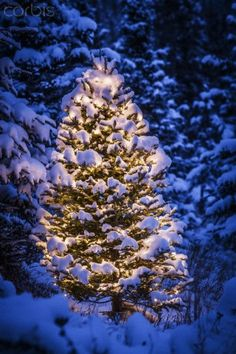 Lit Christmas Tree in snow covered forest of spruce trees, Chugach Mountain foothills, Southcentral Alaska