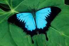 Dit is een mooie detailfoto van een vlinder.