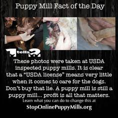 This is reality and why we have to keep educating people so they understand. puppy mills care about nothing except profits. Buy Puppies, Dogs And Puppies, Fact Of The Day, Social Injustice, Work Horses, Stop Animal Cruelty, Puppy Mills, Animal Welfare, Animal Rights