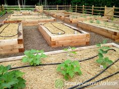 Joe Lamp'l's newly planted raised-bed vegetable garden