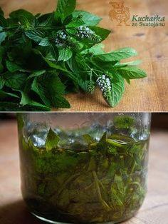 Kuchařka ze Svatojánu: MÁTOVÝ OLEJ Migraine Relief, Keeping Healthy, Health Advice, Kraut, Herb Garden, Korn, Pesto, Pickles, Cucumber