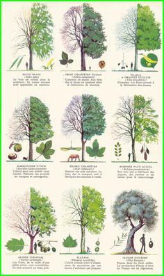 Les arbres 4 ae.gif (964×1623)