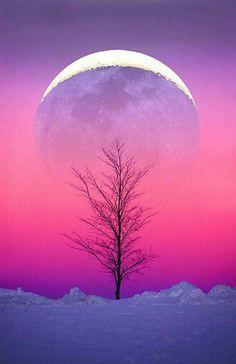 Dolunay üstünde ağaç