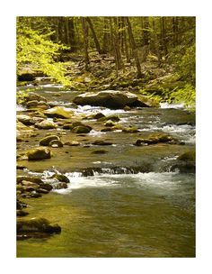 Mountain stream in the Great #Smoky #Mountains National Park