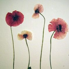 Real Pressed Flowers by Petal Annie (Loose) - Poppies - Medium to Large - For Your Art Project - Flowers shown are an example of what you wi...