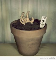 Grow your own Zombie! :D    @Alexandra Trent... this is PERFECT for you!!!