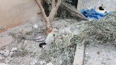El refugio para gatos abandonados en Siria ha sido gravemente bombardeado d6692bf210c9