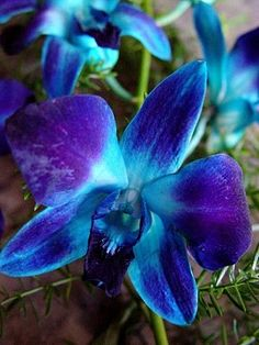 Blue Dendrobium Orchids Lydia has a blue orchid tattooed on her lower back